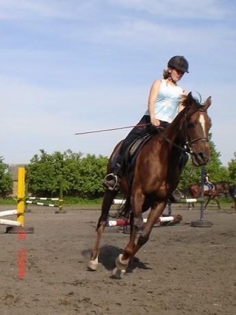 Blackhorse-stránka o koních - Plemena koní - Appaloosa
