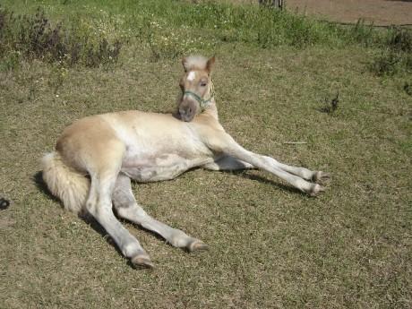 Blackhorse-stránka o koních - Modlitba koně
