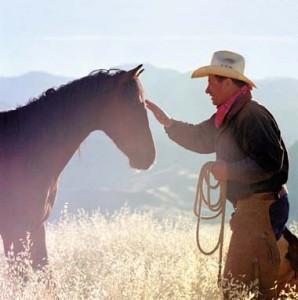Blackhorse-stránka o koních - Plemena koní - Shirský kůň