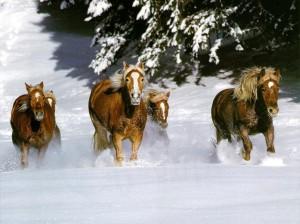 Andaluský kůň   Gardacek